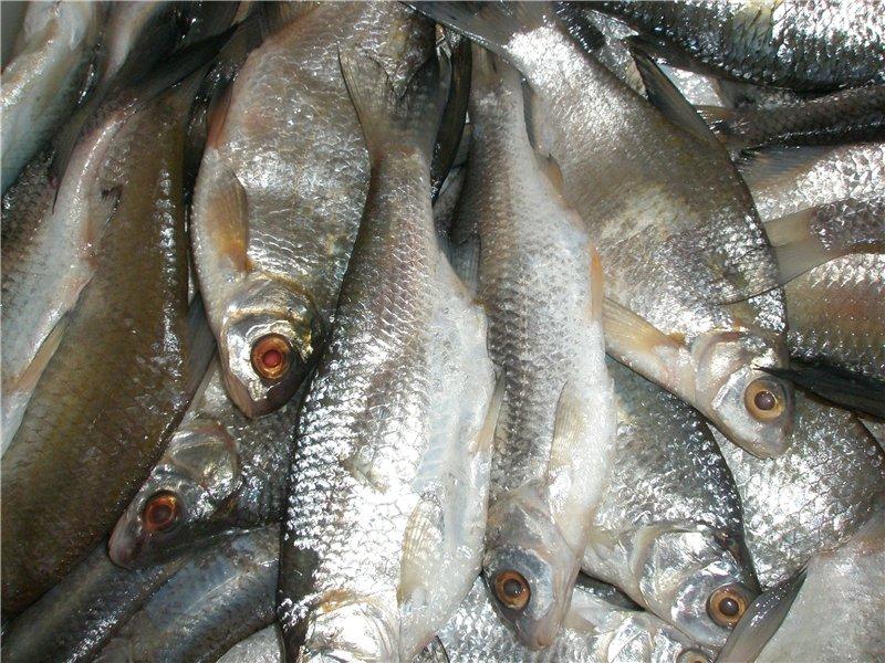 разрушения волжская рыба каталог с фото фото